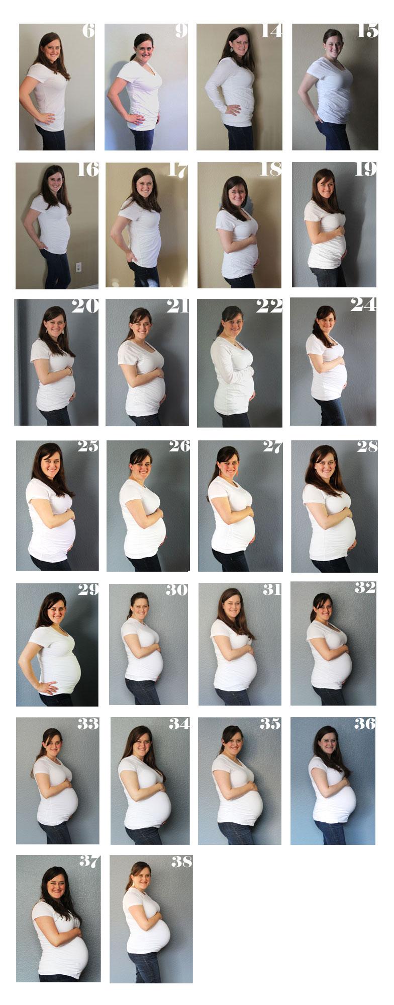 Weekly Pregnancy Chart | www.amusingmj.com